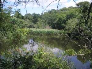 en el medio del rio marrón