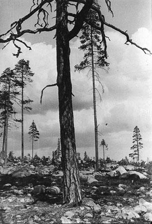 Karelia 2 ,Rodchenko.